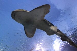 8 Tips to Reduce Your Chances of Experiencing a Shark Attack - LMAW Maritime Attorneys